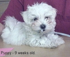 Puppy_1_9_weeks_4
